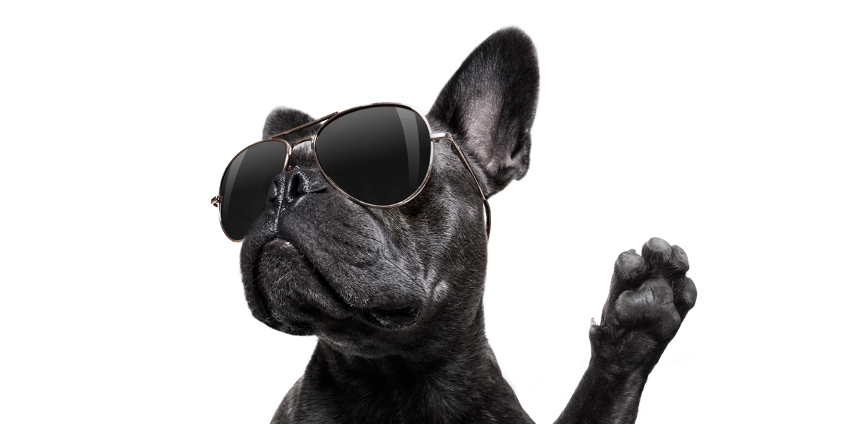 cool dog high five